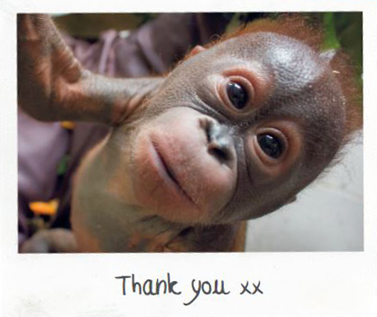 Headshot of baby orangutan Gito sponsored by The Yes Yes Company