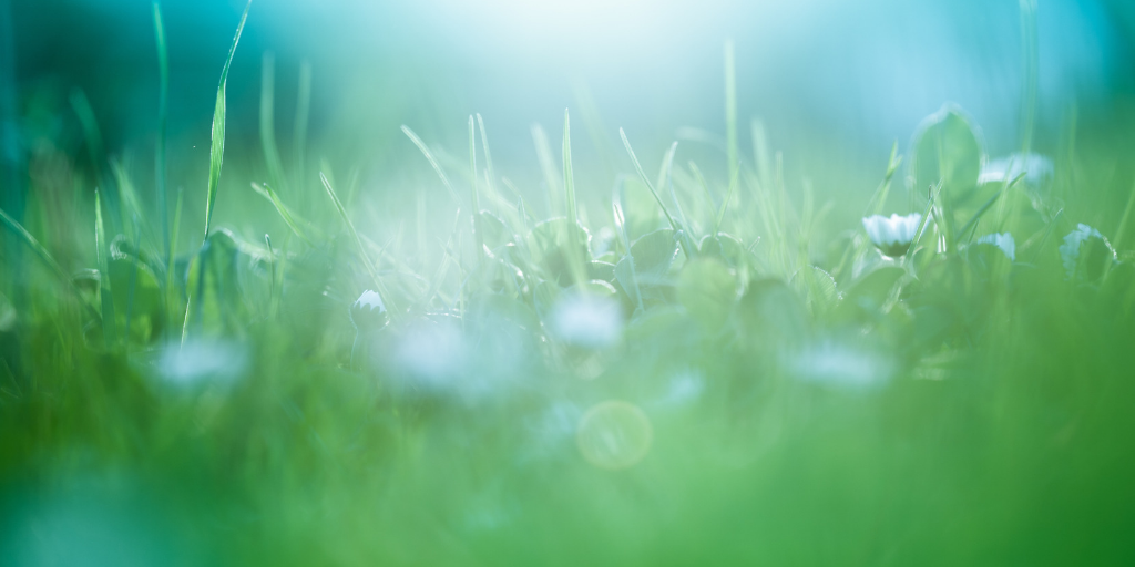 Closeup of grass and daisies representing the power of menopause